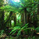 Rainforest New Zealand by Imi Koetz