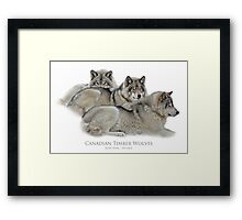 Canadian Timber Wolves Framed Print