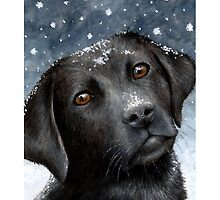 Dog 100 Black Labrador by artbylucie