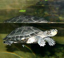 Turtle by Henrik Lehnerer