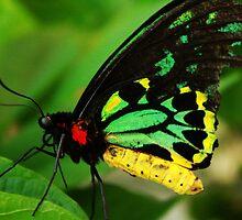 Macro Butterfly by artbyviro