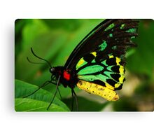 Macro Butterfly Canvas Print