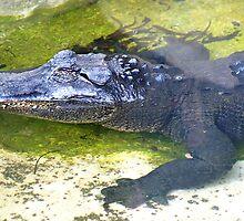 American Alligator by Henrik Lehnerer