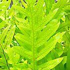Leafy Maui by Robert Meyers-Lussier