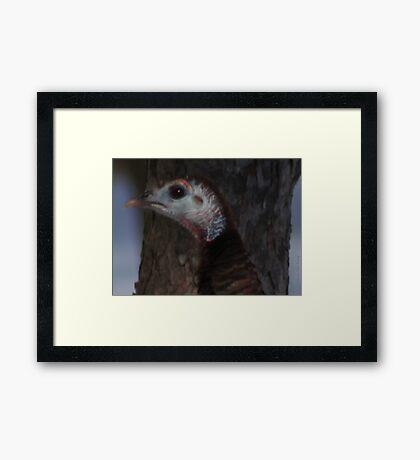 Portrait of a Wisconsin Wild Turkey Framed Print