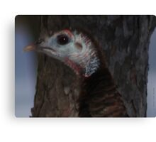 Portrait of a Wisconsin Wild Turkey Canvas Print