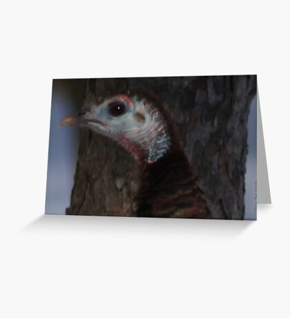 Portrait of a Wisconsin Wild Turkey Greeting Card
