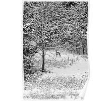 Peering Out - Deer BW Poster