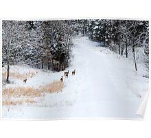 Wary - Deer Poster