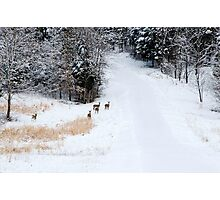 Wary - Deer Photographic Print