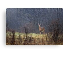 Sentry - White-tailed deer Canvas Print