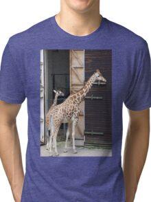Giraffes at Dudley Zoo Tri-blend T-Shirt