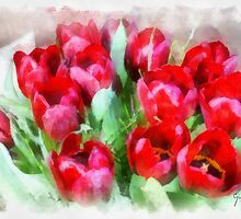 Tulips by Gilberte