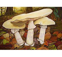 Deathcap Fungus Photographic Print