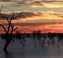 Sunset at Menindee by Beryl  Woodfield
