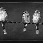 Little Birdies On A Wire by CarolM