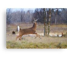 Deer Run - White-tailed deer Canvas Print
