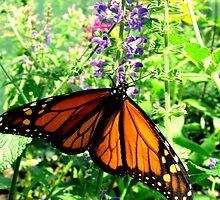 Monarch 2 by lorenvictoria