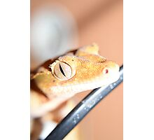Reptiles eyes tell a story Photographic Print