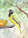 Black-headed Oriole by Maree  Clarkson