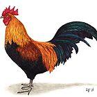 Rooster by Lars Furtwaengler