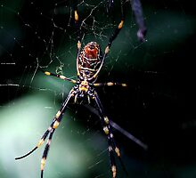 Spider (3) by LeJour