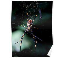 Spider (3) Poster