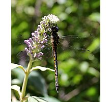 Dragonfly (2) Photographic Print