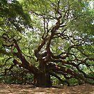 Angel Oak, John's Island S Carolina by barnsis