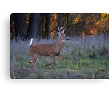 Scent of a Doe - White-tailed deer Canvas Print