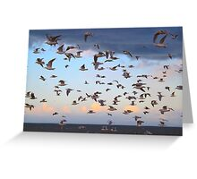 Dungeness Bay Flock of Seagulls Greeting Card