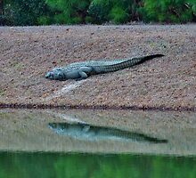 Alligator By The Pond by Cynthia48
