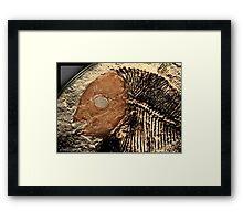 fossil 3 Framed Print
