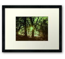 Sunshine in between... Framed Print