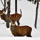 Seeing Double Deer??? by Poete100