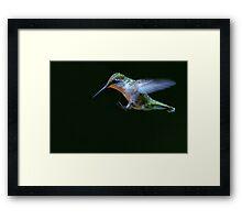 Incoming - Ruby-throated hummingbird Framed Print