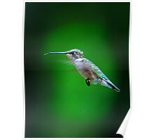 Tongue and Cheek - Ruby-throated hummingbird Poster