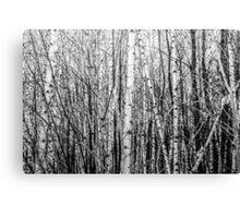 Monochrome Forest / Forêt monochrome Canvas Print