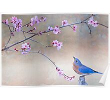 Bluebird and Plum Blossoms Poster