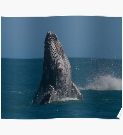upright whale Poster