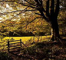 From Woods to Fields by Anne Gilbert