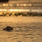 A New Sunset by Nishant Kuchekar