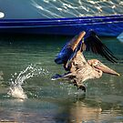 Brown Pelican among the Boats by imagetj