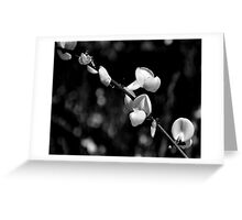 Black & white may flower Greeting Card