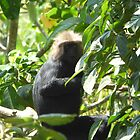 Lion Tailed Macaque by solena432