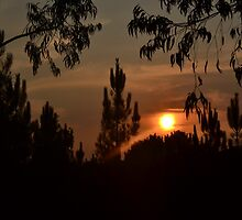 sunset through the trees by lfoliveira