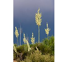 Dance of the Yucca Photographic Print