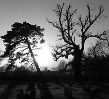 Trees in the Churchyard by mikebov