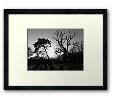 Trees in the Churchyard Framed Print