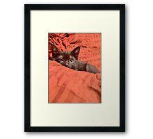 Figgaro Playing Peek-a-boo Framed Print